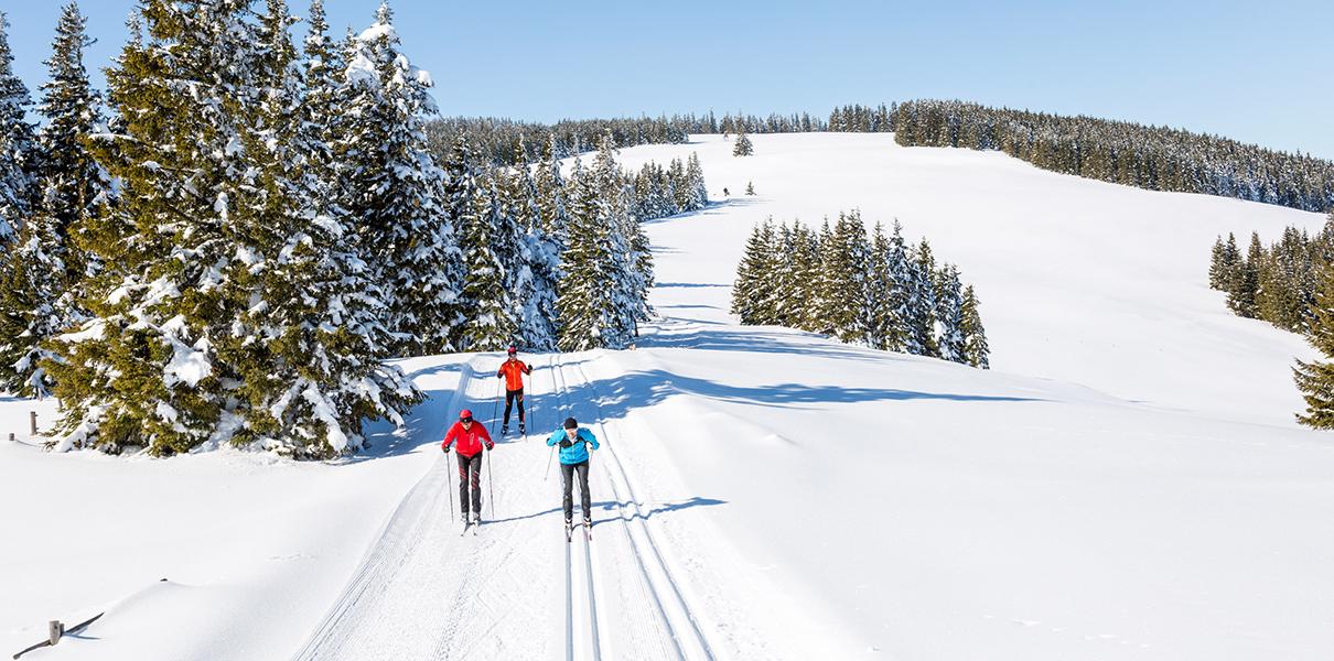 3 Langläufer auf der Feistritzer Schwaig - Kampsteiner Schwaig