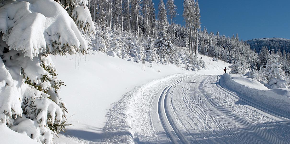tief verschneite Loipe Feistritzsattel - Dreiländereck